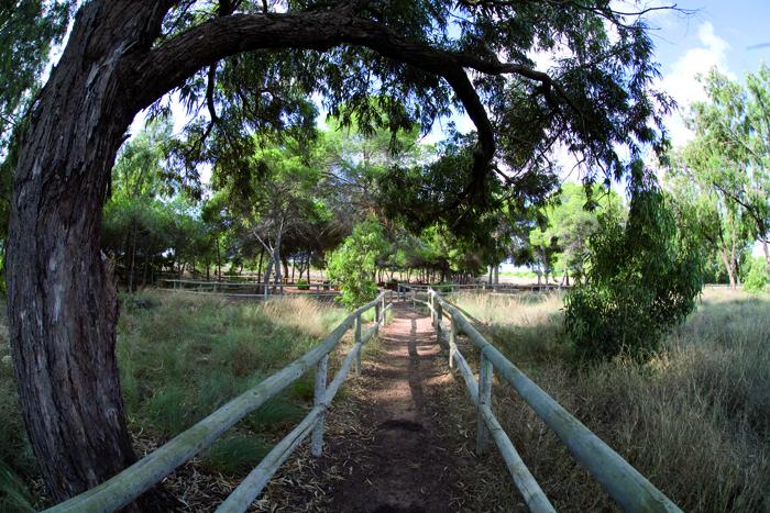 Ruta natura turismo de torrevieja for Oficina turismo torrevieja